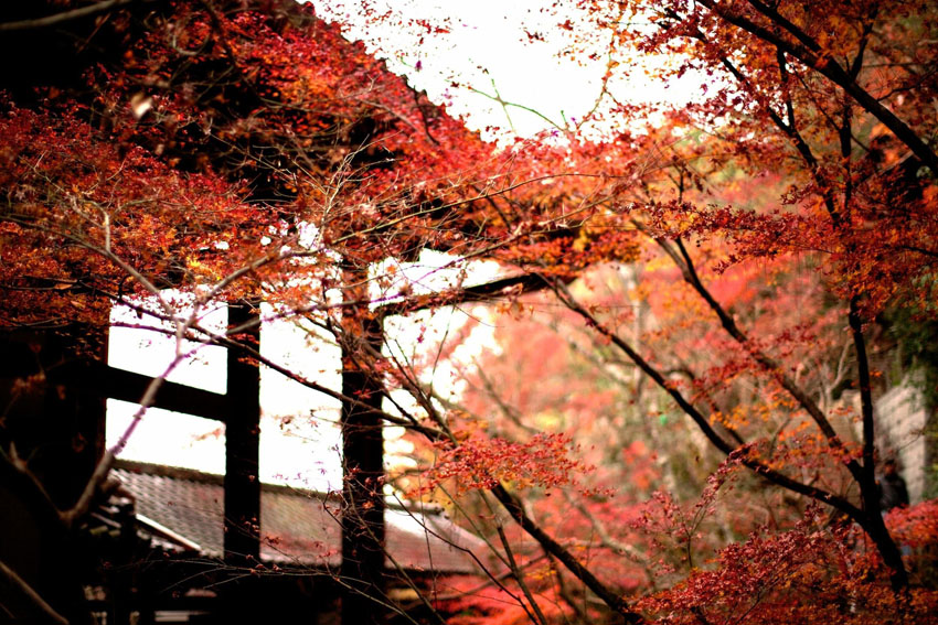 Chrám Eikandō v japonskej prefektúre Kyoto