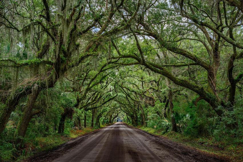 Národné parky v Južnej Karolíne ukrývajú aj takéto cestičky.