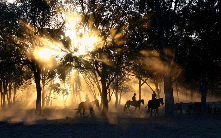 Kone a gaučovia