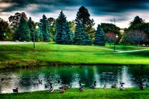 Gýčová krajina s kačicami pri jazere